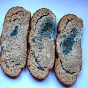 Болезни хлеба