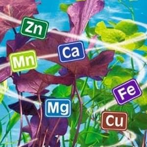 Минеральные вещества в жизни человека